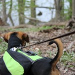 FitDog Friday: A Day in the Park