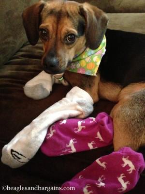 luna wears socks