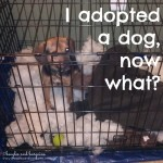 I is for I Adopted a Dog, Now What? #atozchallenge