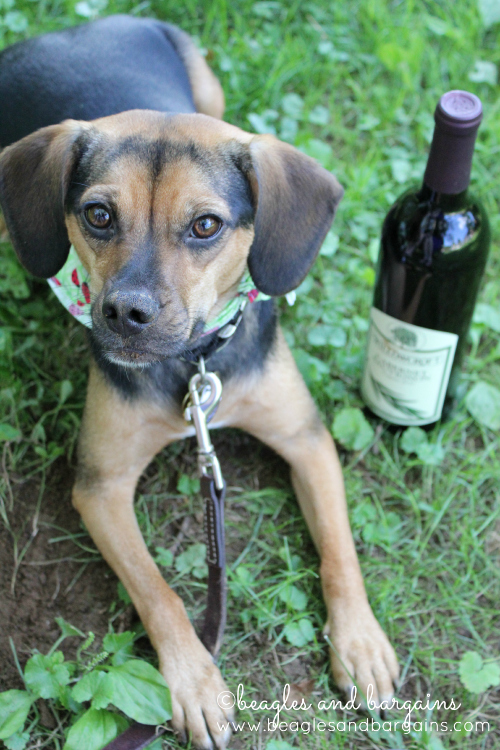 Visit a pet friendly winery.