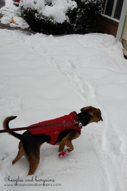 Luna enjoys the snow with her Pawz