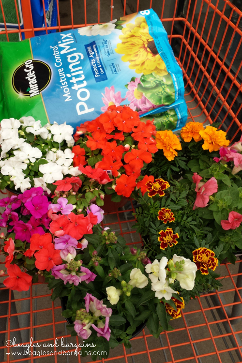 Picking up pet friendly flowers and soil from Home Depot