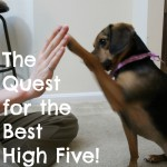 The Quest for the Best High Five!