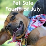 Pet Safe Fourth of July