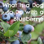 What is a Dog to Do with a Blueberry?