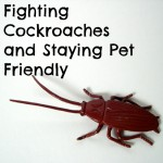 Fighting cockroaches and staying pet friendly