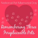 National Pet Memorial Day - Remembering Three Irreplaceable Pets