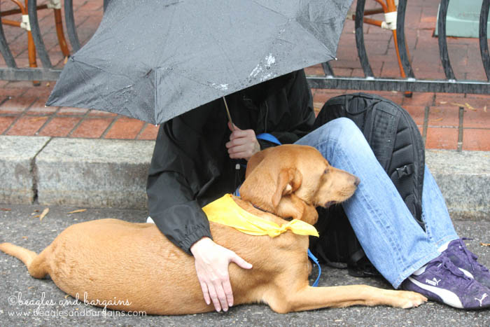 A rescue volunteer keeps an adoptable dog dry from the rain.
