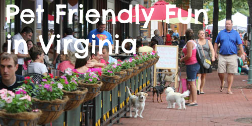 Pet Friendly Fun in Virginia