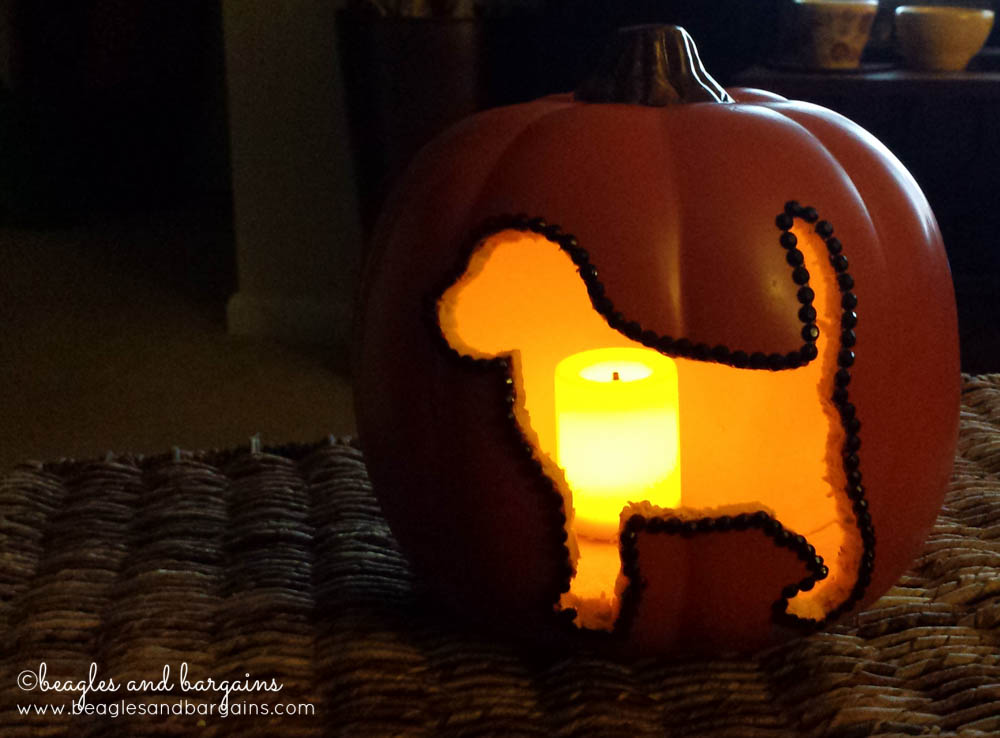 Cute animal pumpkin carvings imgkid the image