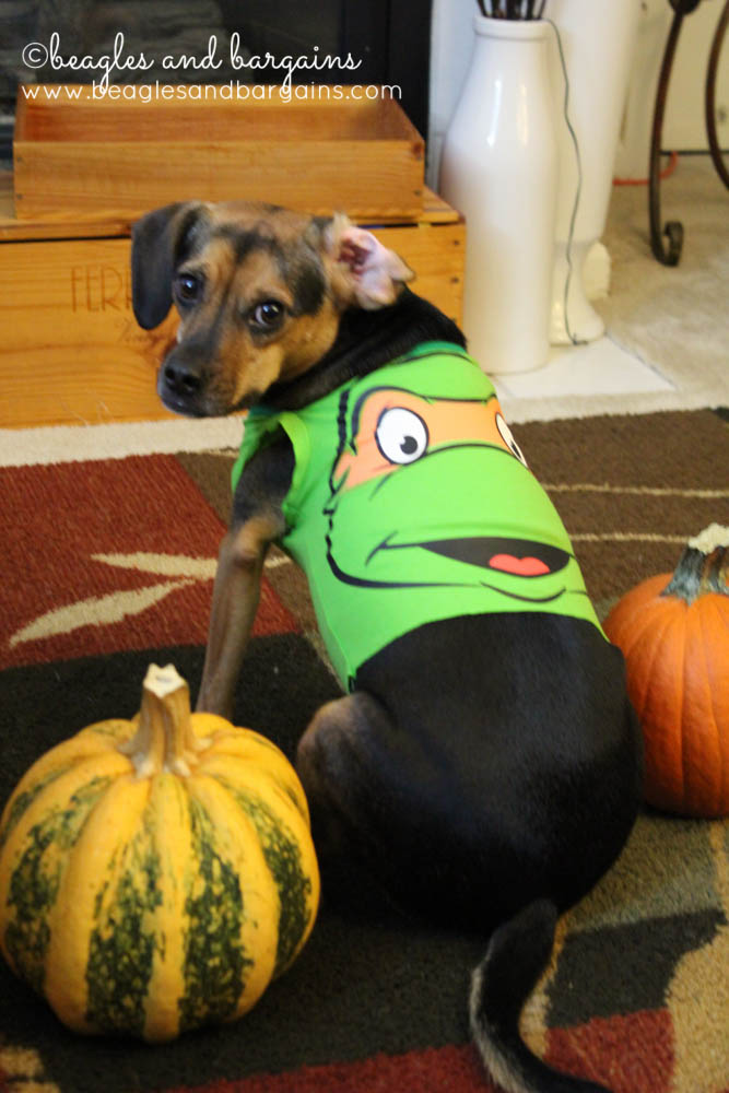 Last Minute DIY Dog Halloween Costumes from Onesies