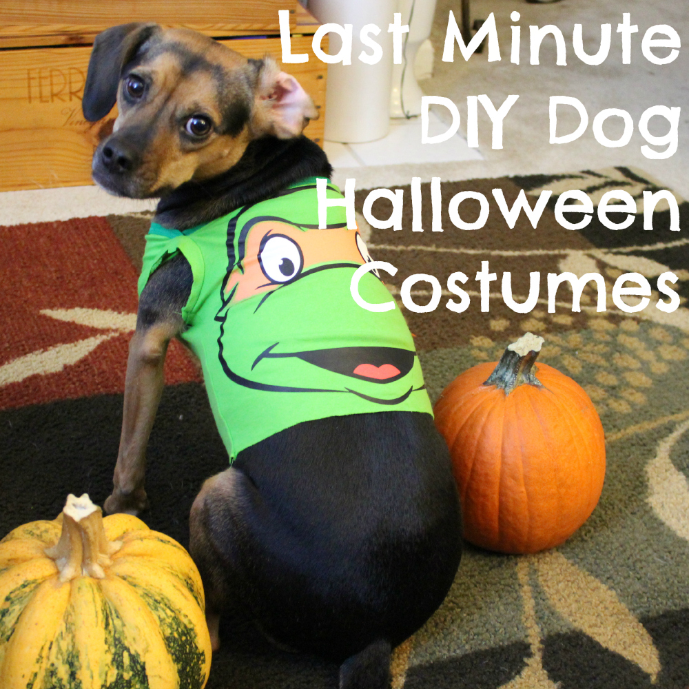 Diy pet costumes archives beagles and bargains last minute diy dog halloween costumes from baby onesies solutioingenieria Image collections