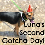 Luna's Second Gotcha Day!