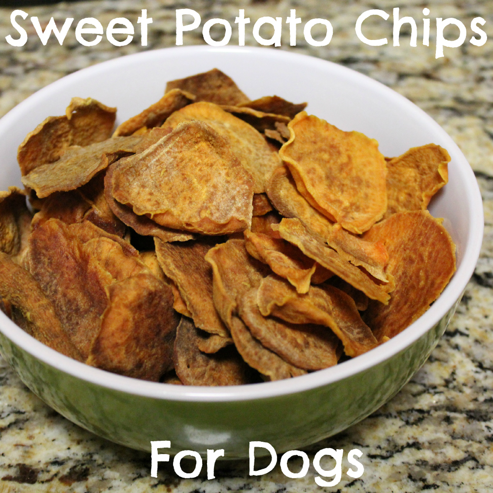 Sweet Potato Chips for Dogs