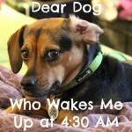 Dear Dog Who Wakes Me Up at 4:30 AM