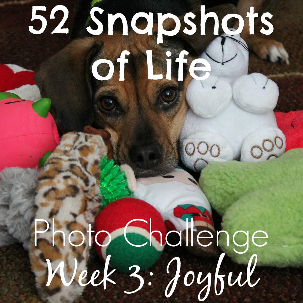 52 Snapshots of Life: - Photo Challenge - Week 3: Joyful