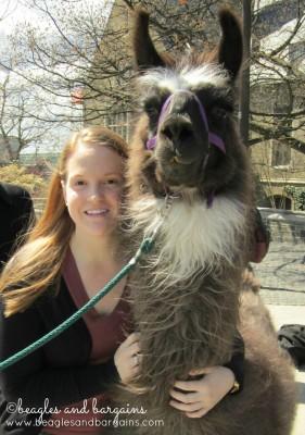 Jessica with a Llama