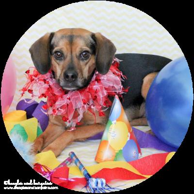 Beagles and Bargains' Blogiversary + Birthday Celebration!