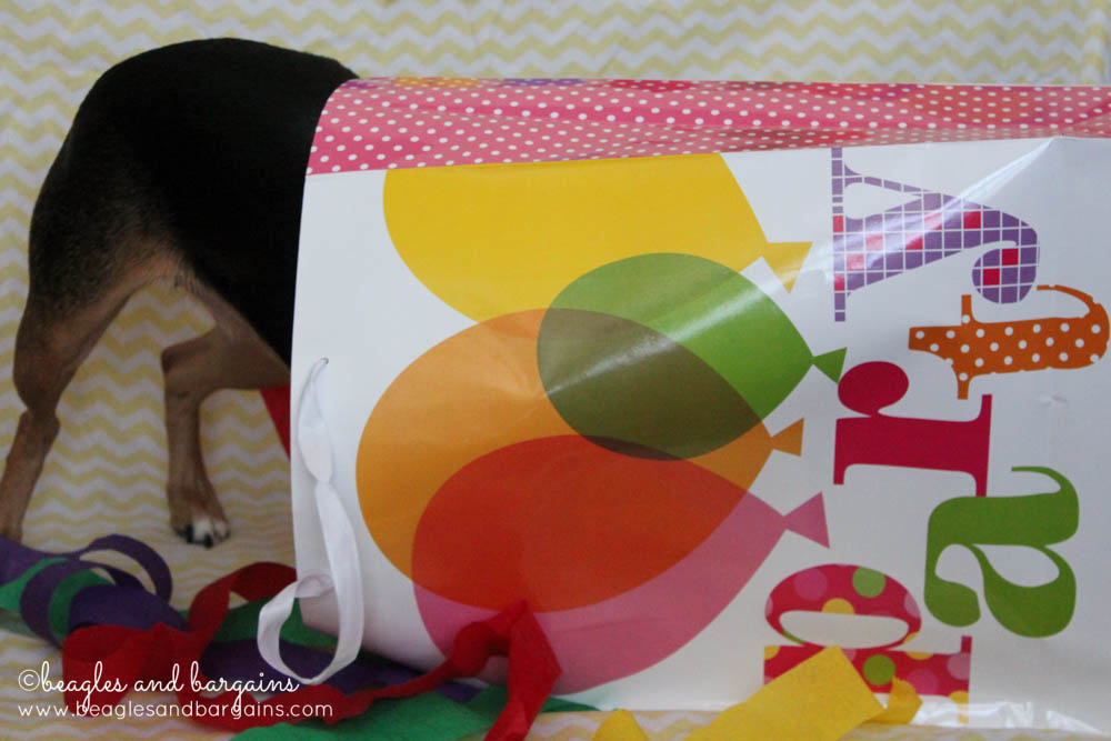 Luna searches for more giveaway prizes in our Blogiversary and Birthday Celebration!