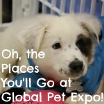 Oh, the Places You'll Go at Global Pet Expo!