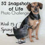 52 Snapshots of Life - Photo Challenge - Week 13: SPRING