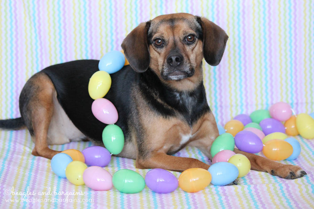 Happy Easter Dog Happy Easter From Beagles Amp