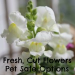 Fresh, Cut Flowers – Pet Safe Options