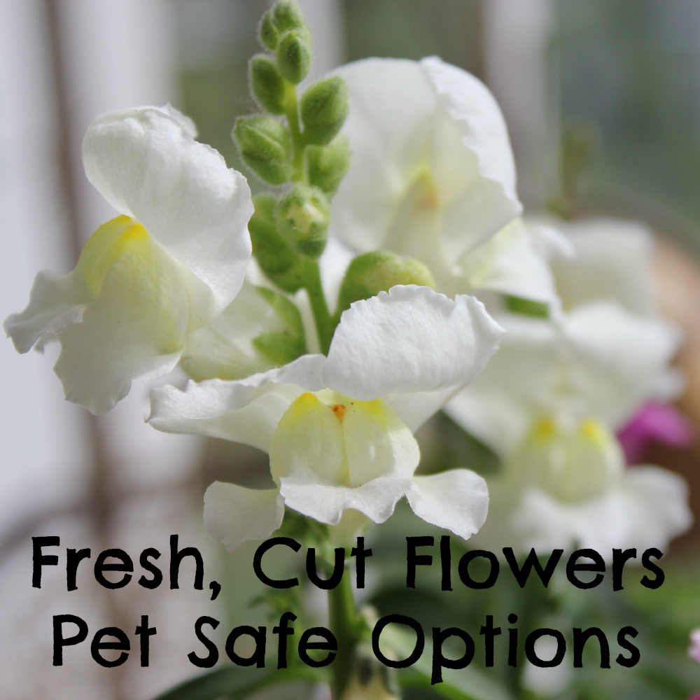 Pet safe fresh cut flowers options izmirmasajfo