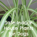 Safe Indoor House Plants for Dogs