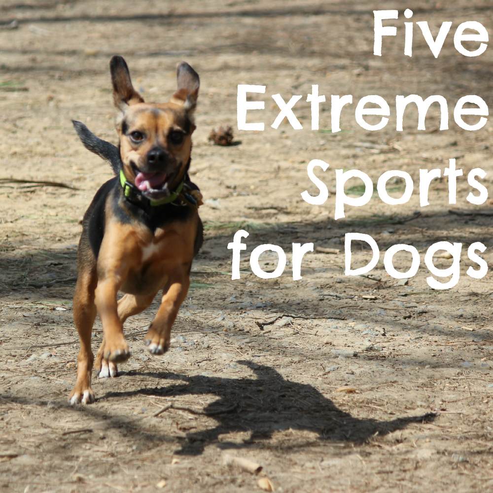Five Extreme Sports for Dogs