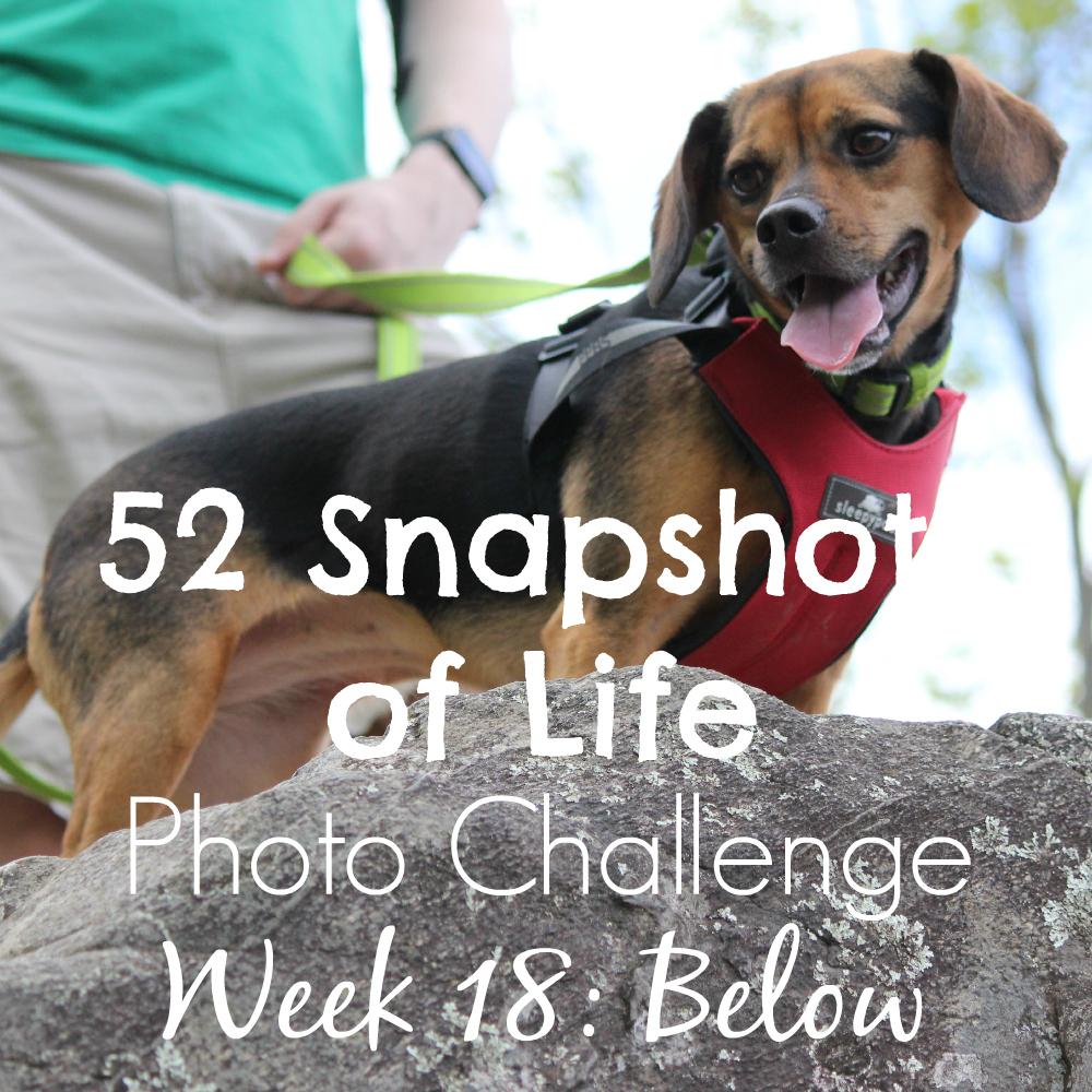52 Snapshots of Life - Photo Challenge - Week 18: BELOW