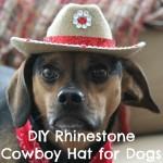 DIY Rhinestone Cowboy Hat for Dogs