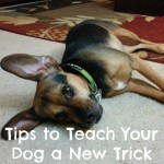 Tips to Teach Your Dog a New Trick