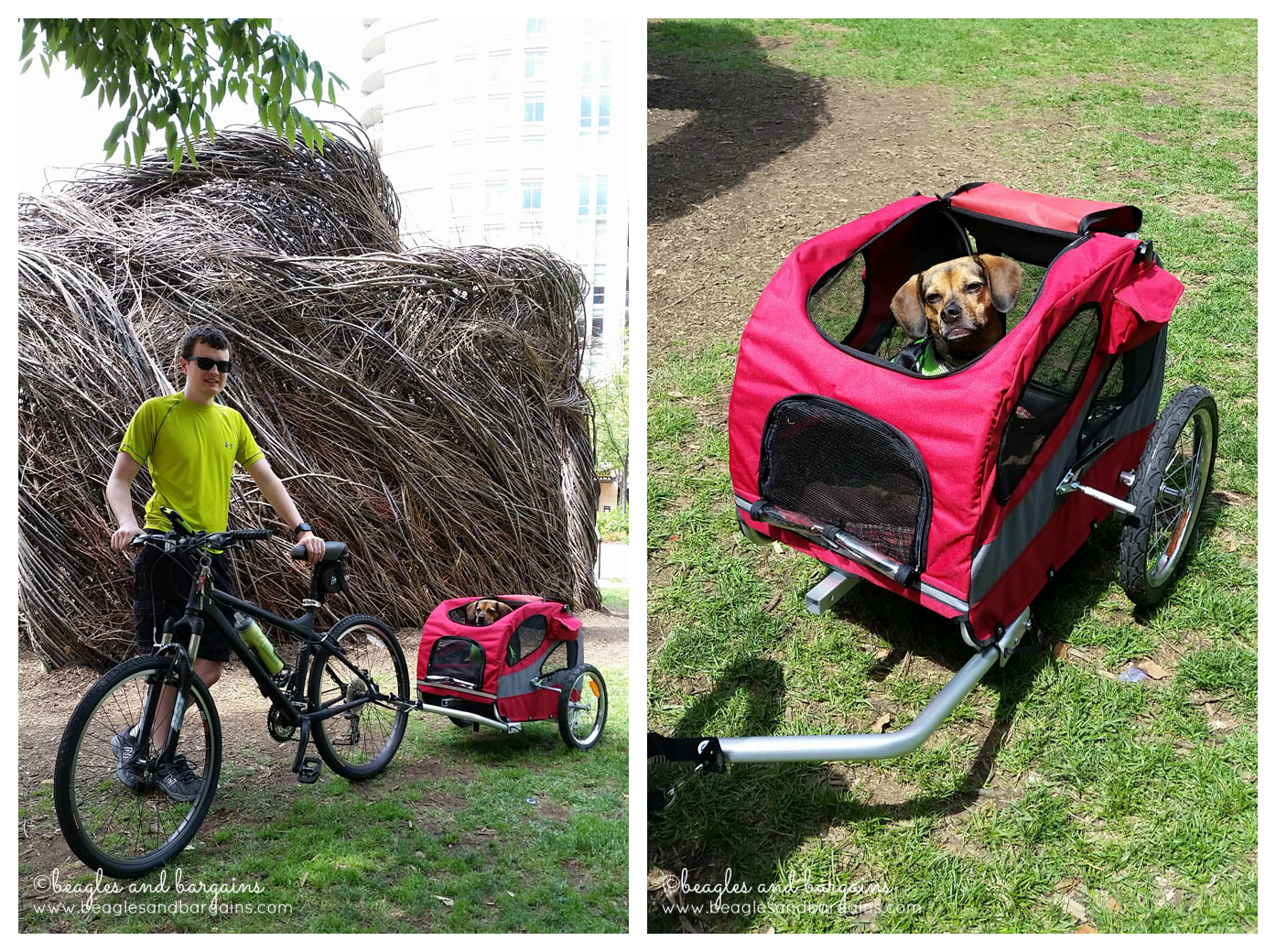 We took our Luna on a bike ride on the W&OD Trail in our Solvit HoundAbout Trailer.
