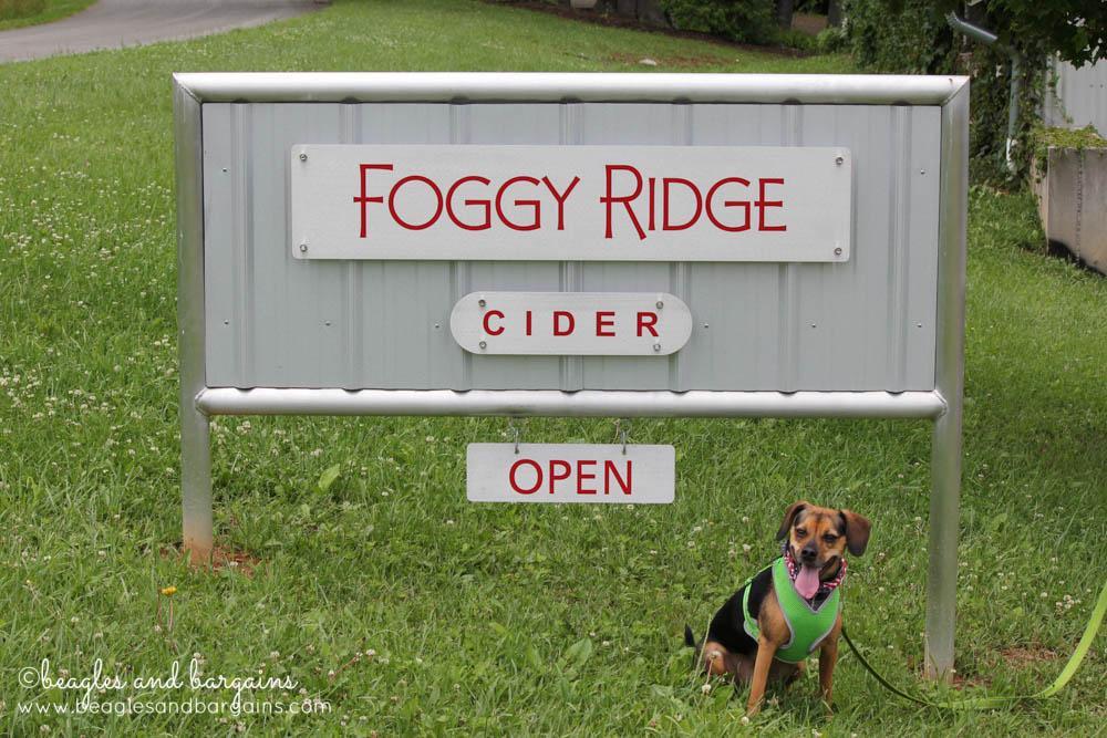 Luna visits Foggy Ridge Cidery
