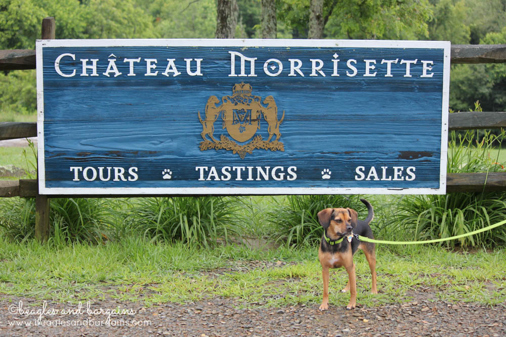Luna visits Chateau Morrisette, a pet friendly winery.