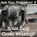Are You Prepared if Your Dog Goes Missing?