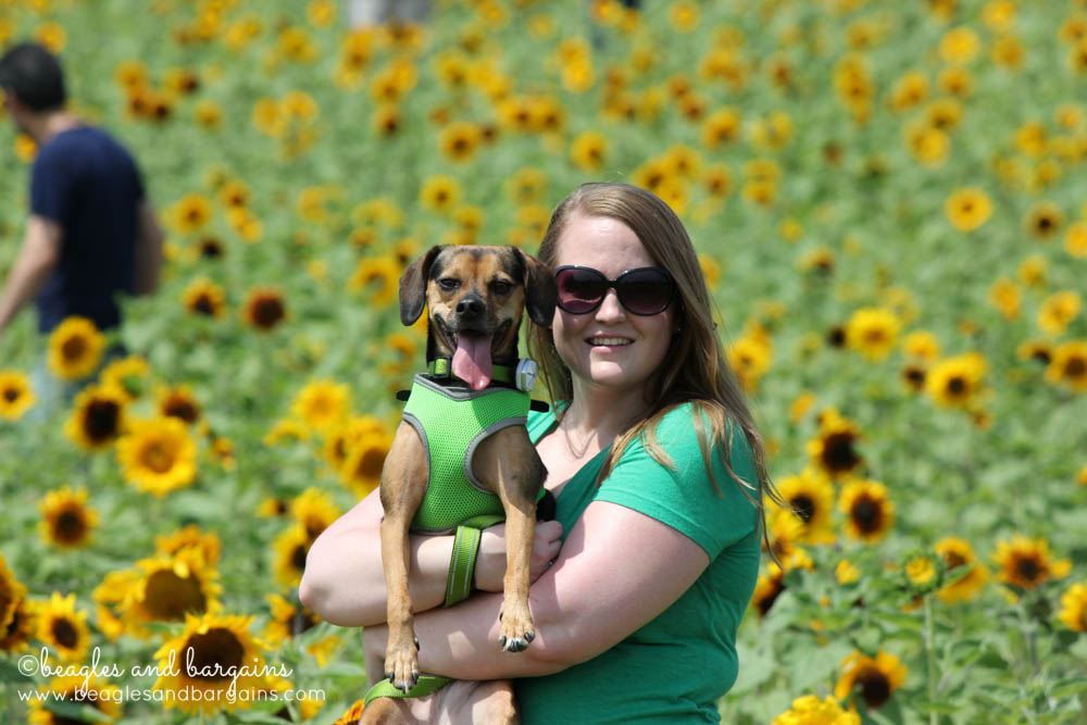 Me and Luna love the Sunflowers from Burnside Farms