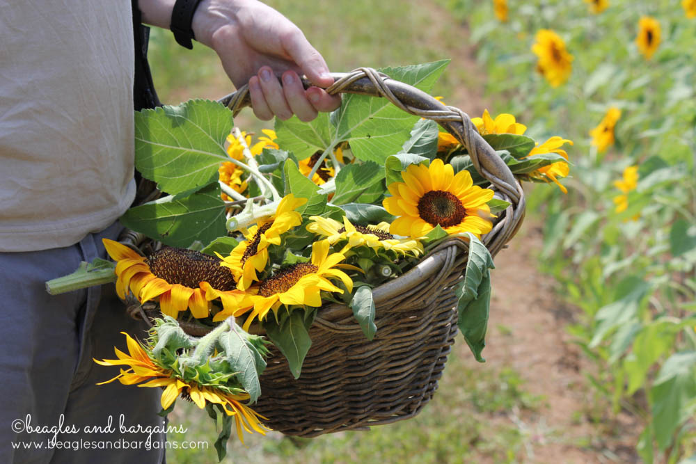 A basket full of Sunflowers