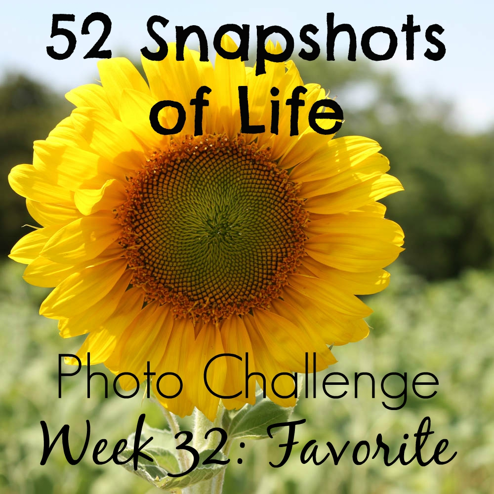 52 Snapshots of Life - Favorite - Dogs in a Sunflower Field