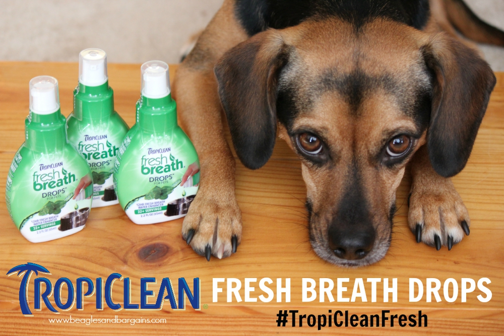 how to help dogs bad breath