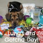Celebrating Luna's 3rd Gotcha Day!