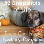 52 Snapshots of Life - Week 43 - Pumpkin - Pass the Pumpkin!