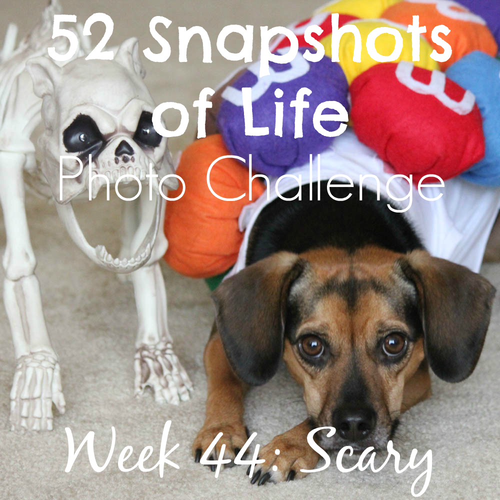 52 Snapshots of Life - Week 44 - Scary - 10 Scary Things As Told By Luna