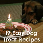 Baking for Special Occasions – 19 Easy Dog Treat Recipes