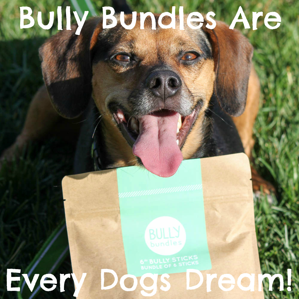 bully bundles are every dogs dream