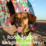 Road Trippin' Beagle Goes West
