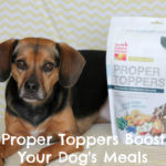 The Honest Kitchen's Versatile Proper Toppers Boost Your Dog's Meals