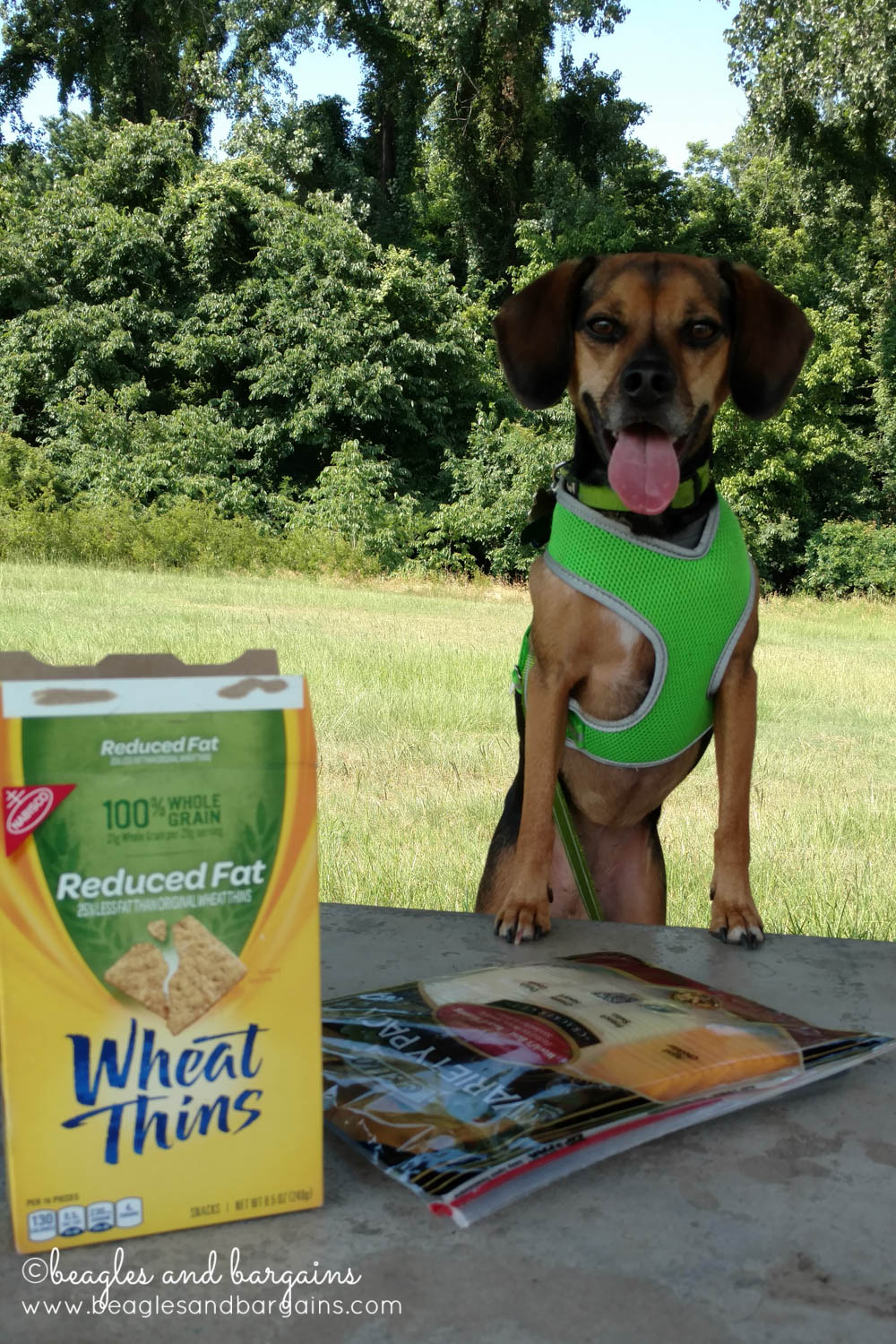 Luna enjoys a picnic lunch in Arkansas - RoadTrippinBeagle