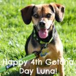 Happy 4th Gotcha Day Luna!